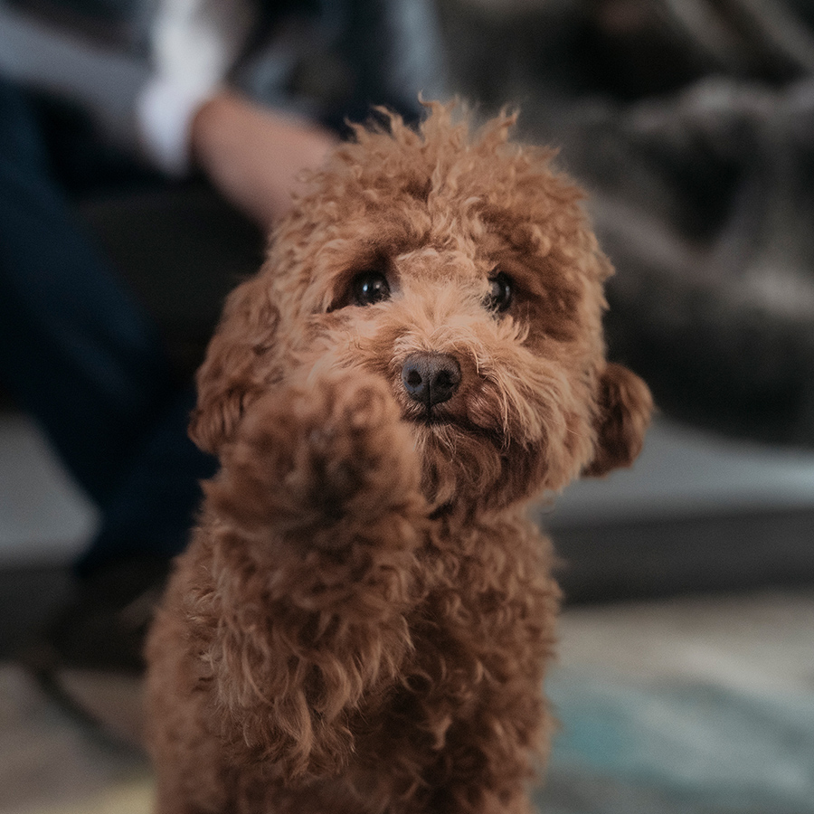 Aston Rowe dog